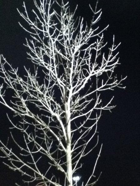 Tree in the night - lit by parking lot light