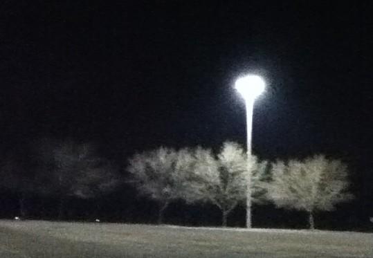 trees in mall parking log JPG