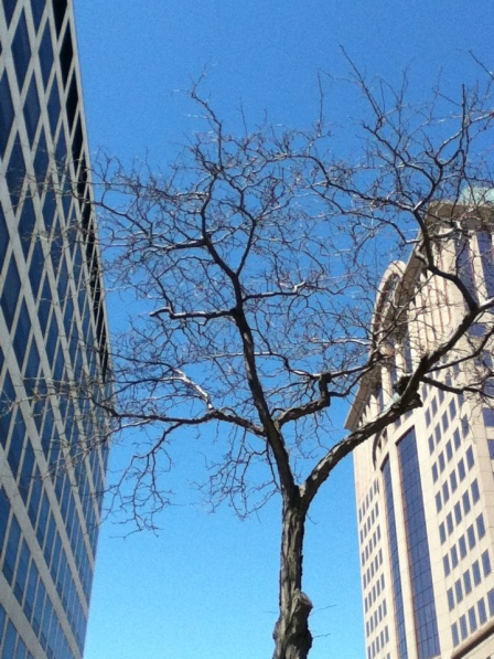 """""""Tight squeeze: a tree grows in Milwaukee"""" May 13, 2013"""