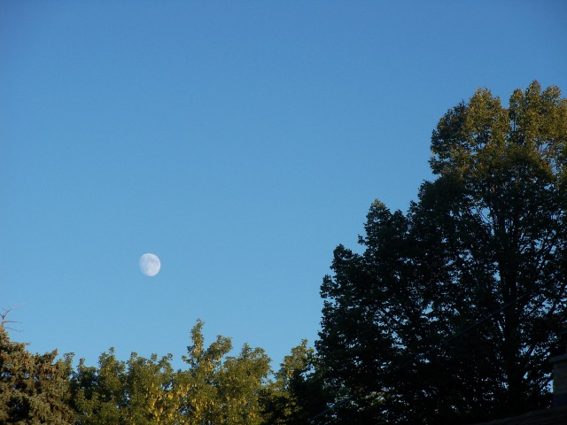 Sunshine on the treetops and a daytime moon