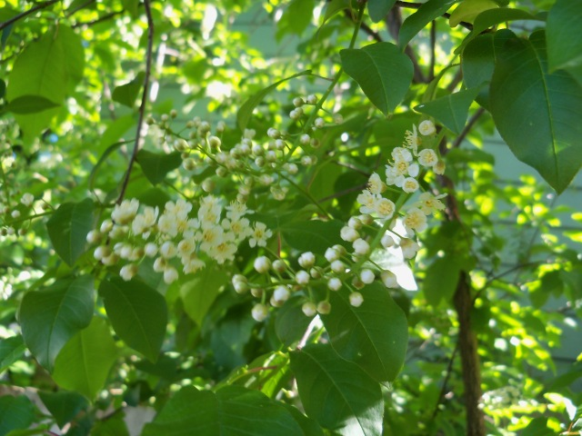 mystery blossoms and berries