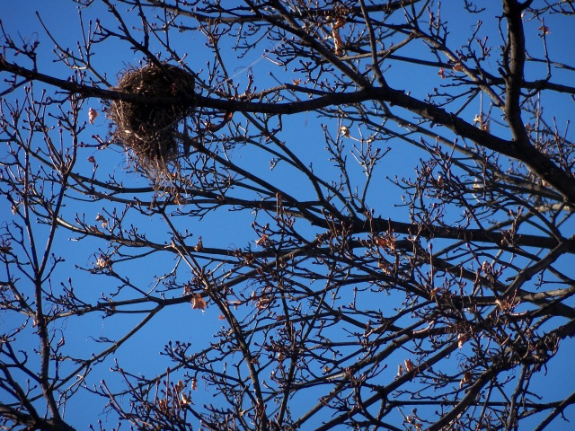 Empty bird's nest in winter