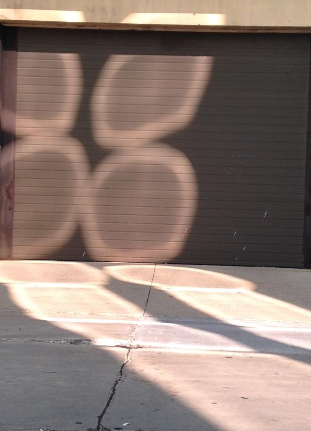 Light Shadows (#2)