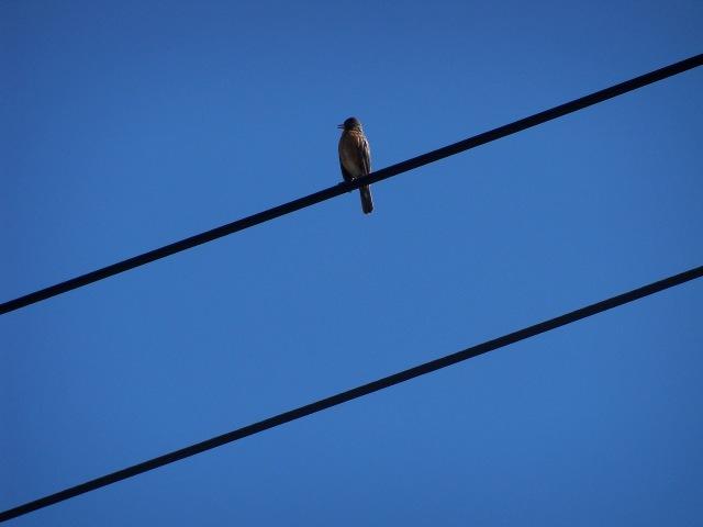 bird on power lines