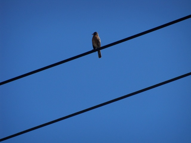 bird on power lines