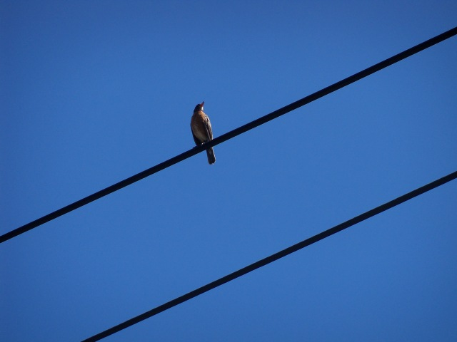 bird on power line