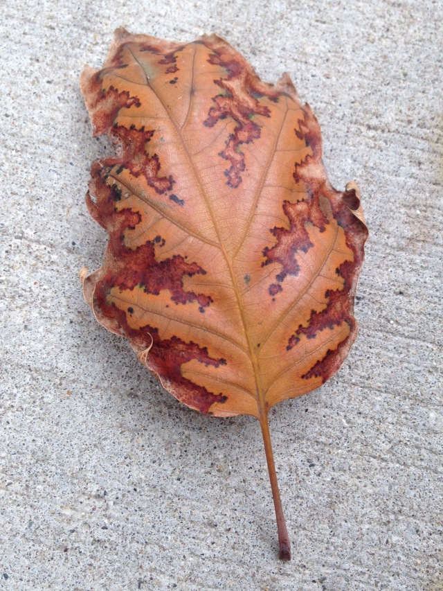 A Perfect Autumn Leaf