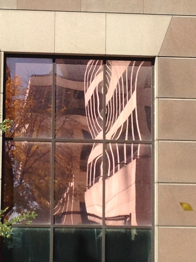 distorted office windows and a single leaf